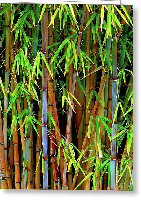 Greeting Card featuring the photograph Bamboo by Harry Spitz
