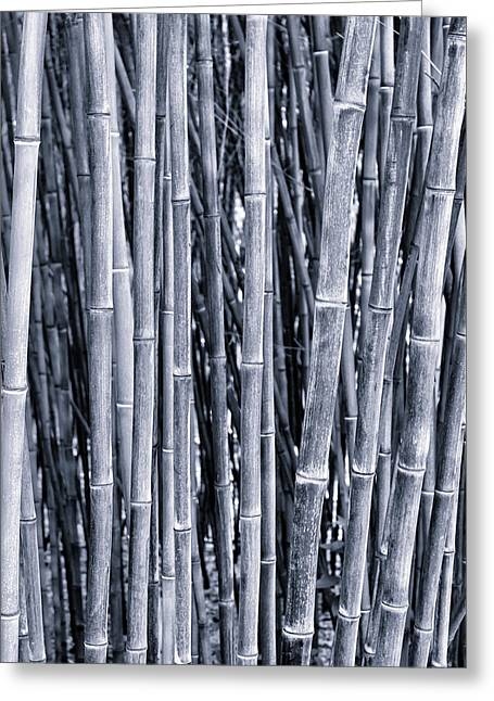 Bamboo Greeting Card by Keith Bowden