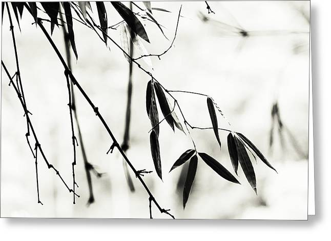 Bamboo Leaves 1. Black And White Greeting Card