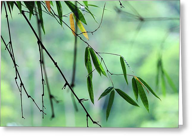 Bamboo Leaves 1 Greeting Card