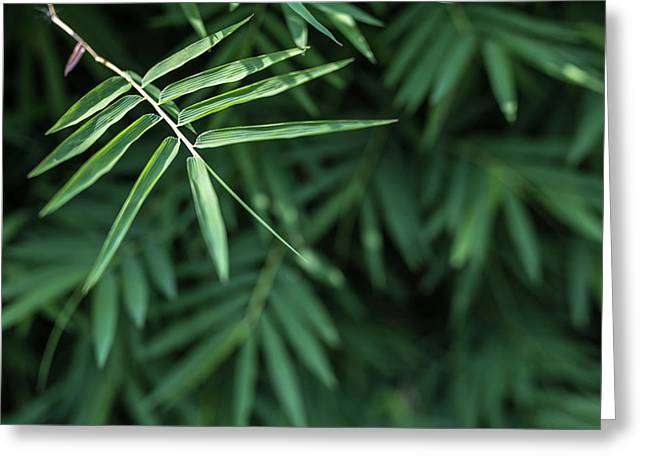 Greeting Card featuring the photograph Bamboo Leaves Background by Jingjits Photography