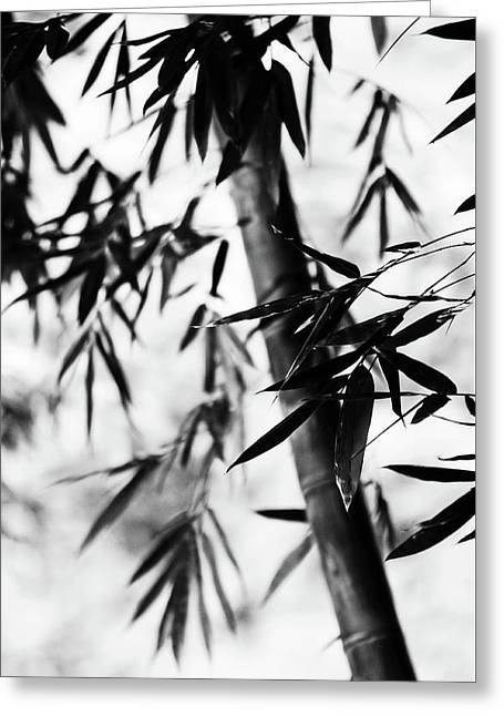 Bamboo Leaves. Black And White Greeting Card by Jenny Rainbow