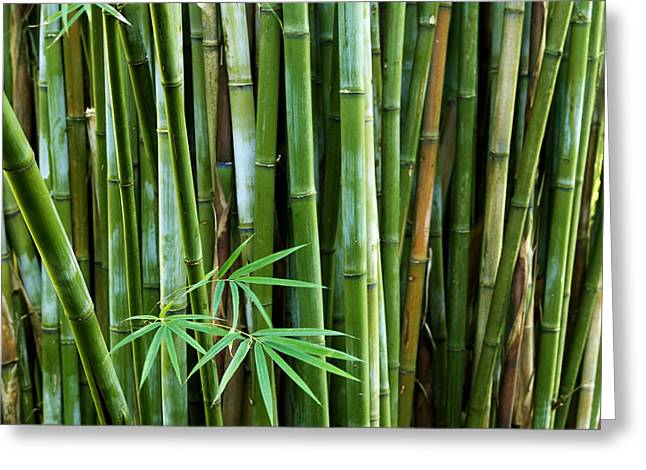 Many Greeting Cards - Bamboo  Greeting Card by Les Cunliffe