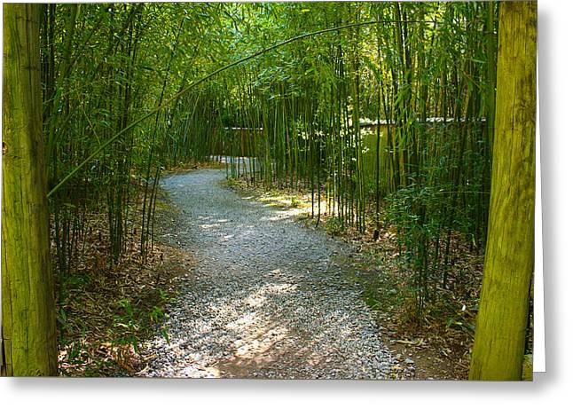 Bamboo Path 2 Greeting Card by Denise Keegan Frawley