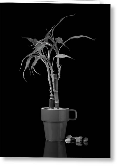 Bamboo Plant Greeting Card by Tom Mc Nemar