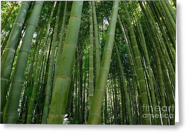 Bamboo Plantation Greeting Card by Sami Sarkis