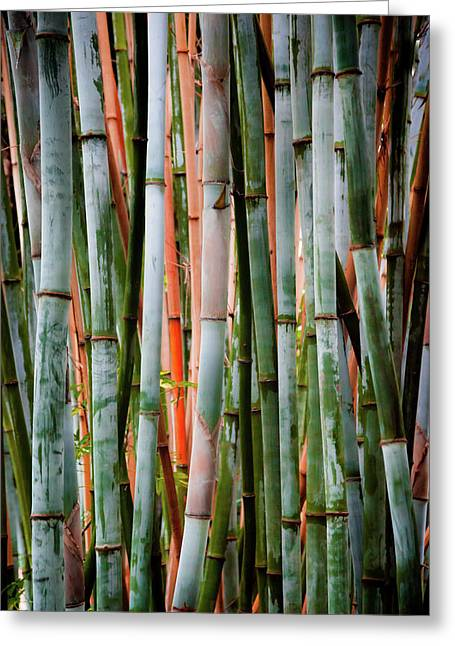 Bamboo Seduction II Greeting Card by Karen Wiles