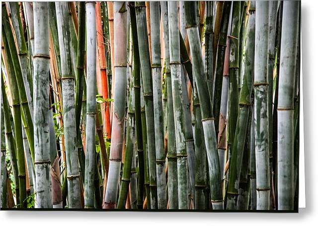 Bamboo Seduction Greeting Card by Karen Wiles