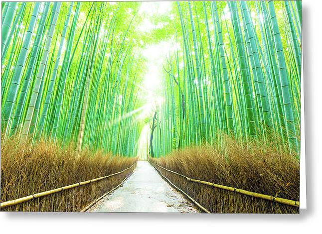 Bamboo Tree Forest Beams God Rays Straight Path H Greeting Card