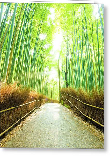 Bamboo Tree Forest Sun Light Beams Empty Road Greeting Card