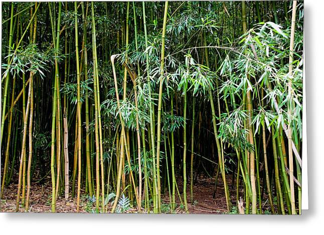 Bamboo Wind Chimes  Waimoku Falls Trail  Hana  Maui Hawaii Greeting Card