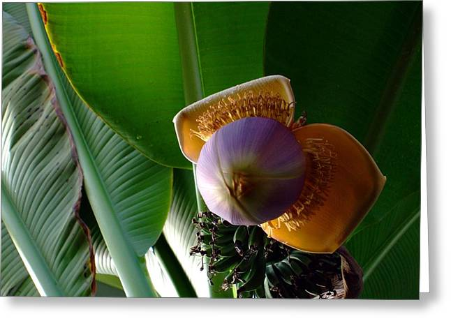 Banana Bloom Greeting Card by Mindy Newman