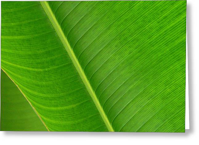 Banana Leaf Abstract Greeting Card