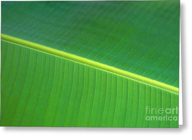 Banana Leaf Greeting Card by Dana Edmunds - Printscapes