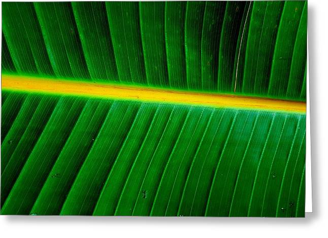 Banana Plant Leaf Greeting Card