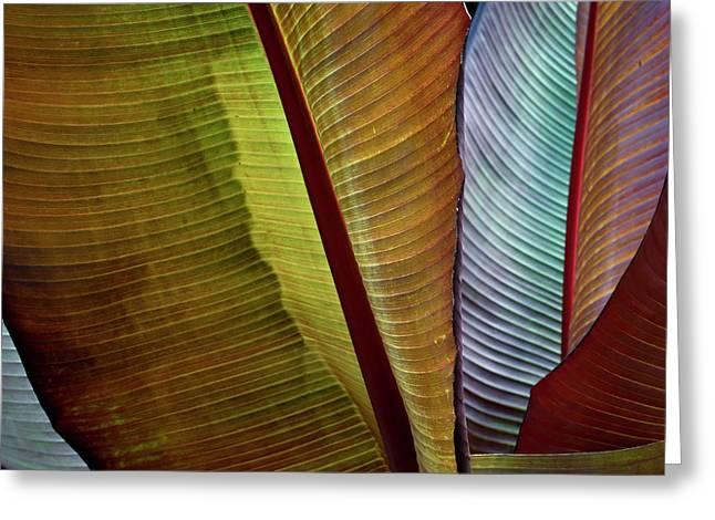 Banana Plant Leaves I Color Greeting Card by David Gordon