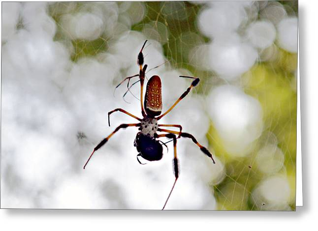 Banana Spider Lunch Time 2 Greeting Card