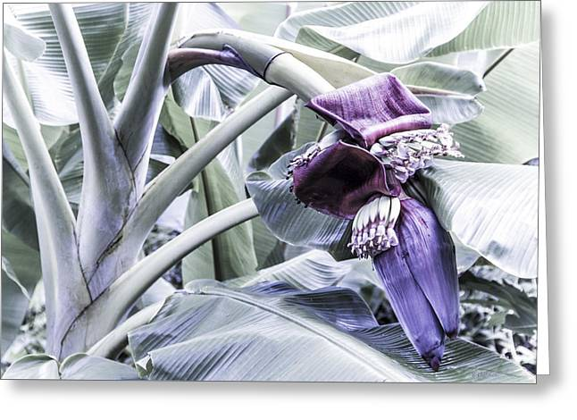 Greeting Card featuring the photograph Banana Beginnings In Cool Shades by Kerri Ligatich
