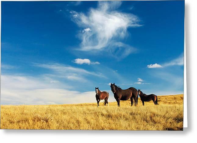 Band Of Horses Greeting Card by Todd Klassy