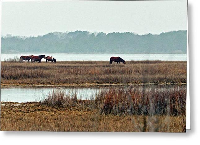 Band Of Wild Horses Along Sinepuxent Bay Greeting Card