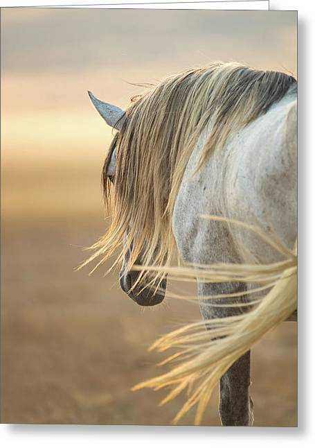 Band Stallion Sunrise Greeting Card