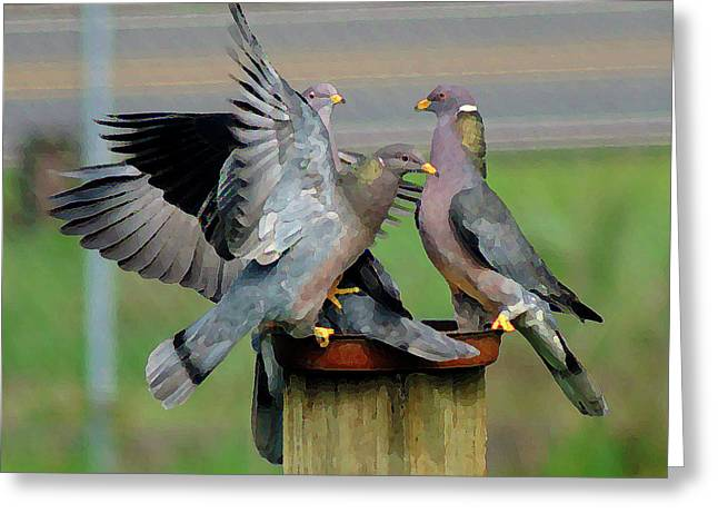 Band-tailed Pigeons #1 Greeting Card