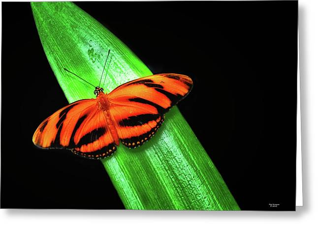 Banded Orange Longwing Greeting Card
