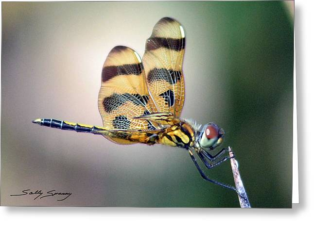 Banded Pennant Greeting Card
