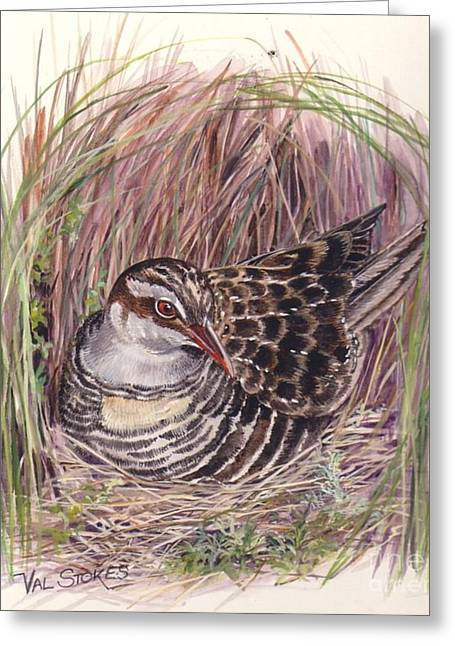 Banded Rail Greeting Card by Val Stokes