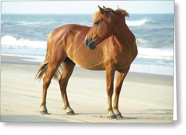 Banker Horse - 5 Greeting Card