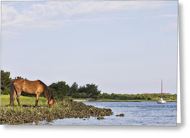 Greeting Card featuring the photograph Banker Horse Along Taylors Creek by Bob Decker