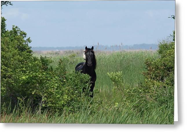 Banker Horse And Egret - Landscape Greeting Card