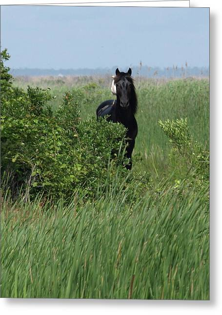 Banker Horse And Egret - Portrait Greeting Card
