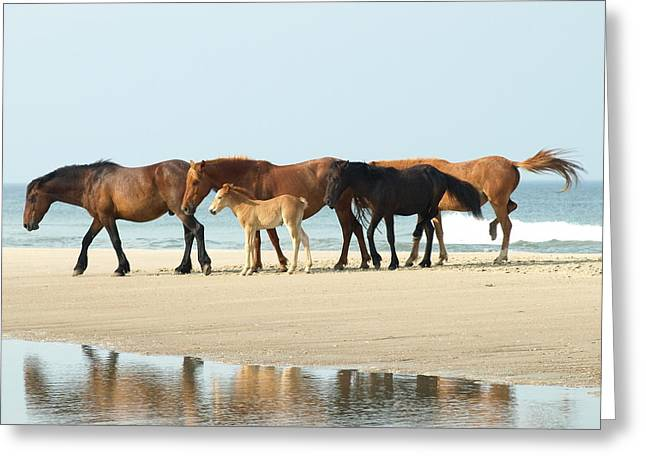 Wild Horses Greeting Cards - Banker Horses - 1 Greeting Card by Jeffrey Peterson