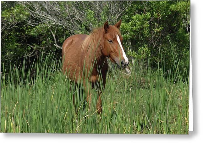 Banker Horses - 10 Greeting Card