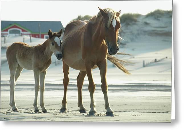Banker Horses - 3 Greeting Card