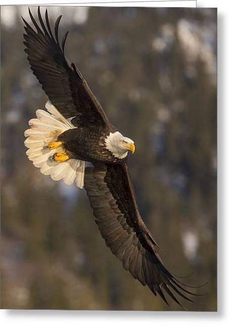 Banking Bald Eagle Greeting Card