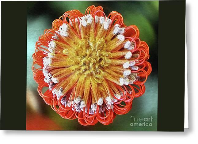 Banksia Art By Kaye Menner Greeting Card