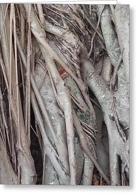 Banyan In Maui Greeting Card