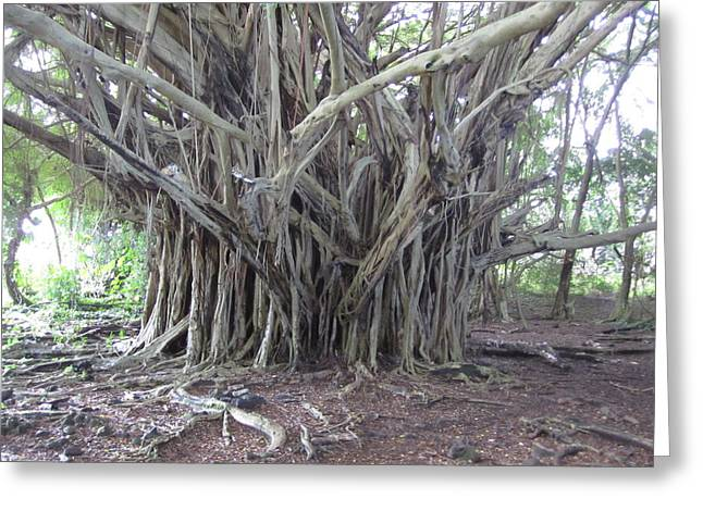 Banyan Greeting Card by Ron Smith