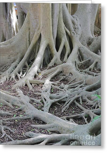 Banyan Roots Greeting Card by Carol Groenen