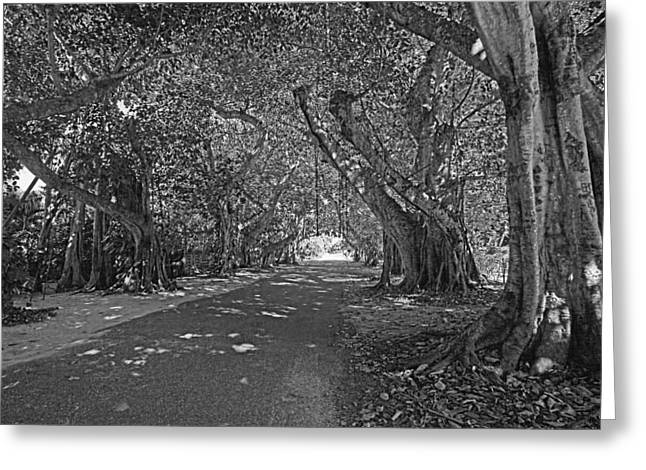 Banyan Street 2 Greeting Card