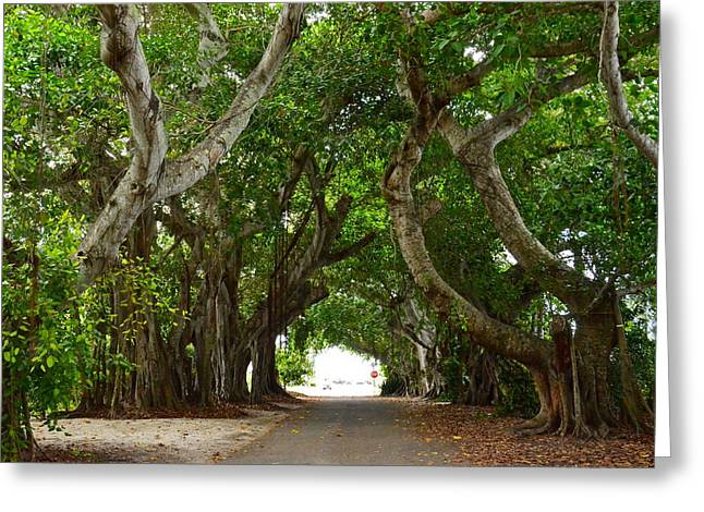 Banyan Street Greeting Card