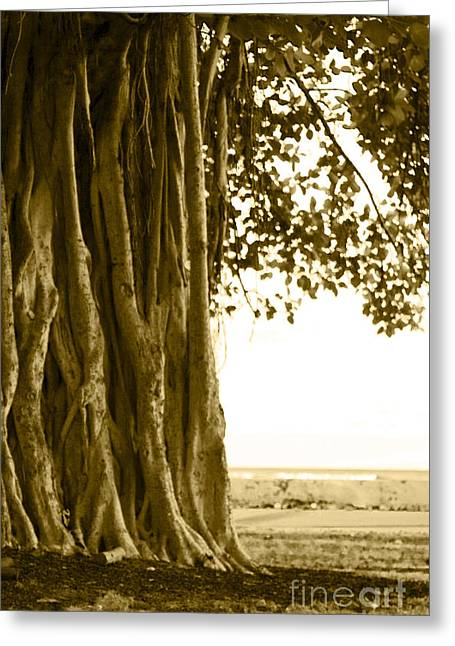 Banyan Surfer - Triptych  Part 2 Of 3 Greeting Card by Sean Davey