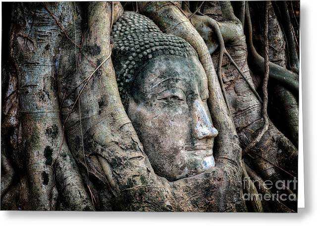 Banyan Tree Buddha Greeting Card by Adrian Evans