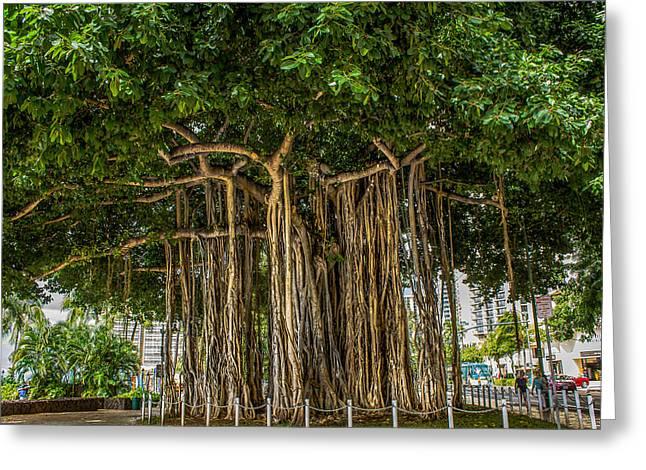 Banyan Tree Greeting Card by Laurel Wang