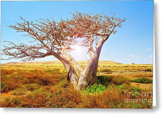 Baobab Greeting Card by Sabino Parente