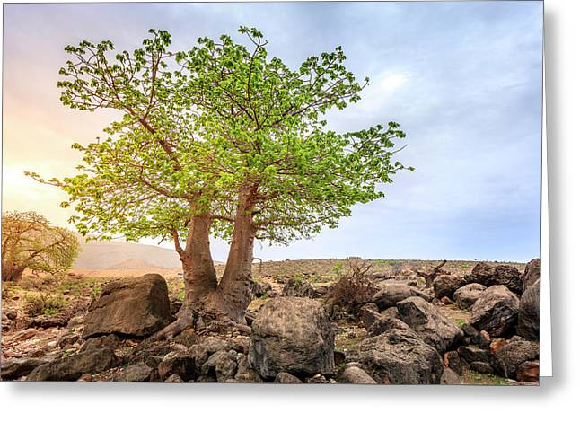 Greeting Card featuring the photograph Baobab Tree by Alexey Stiop