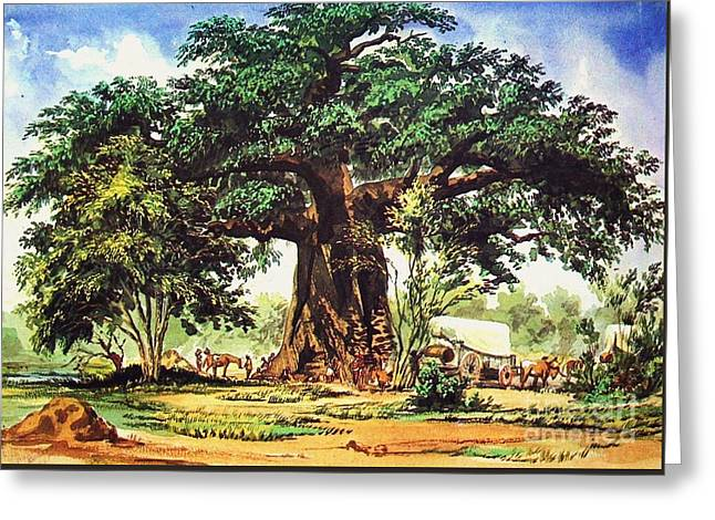 Baobab Tree - South Africa Greeting Card by Pg Reproductions