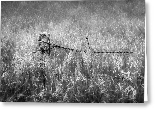 Barb Wire Fence Square Greeting Card